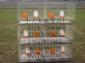 蛋鸡笼 雏鸡笼 肉鸡笼 饲料槽 饮水器 组笼钉组笼钳 水箱